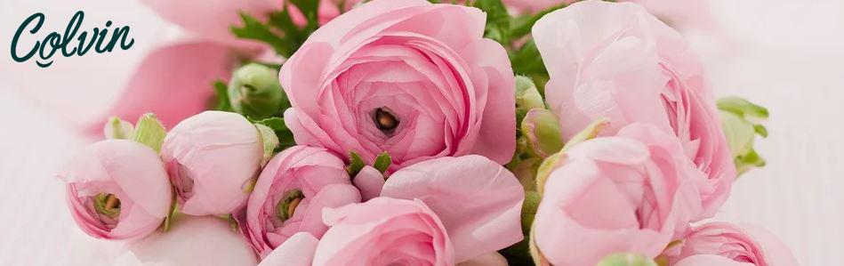 Rosas Colvin