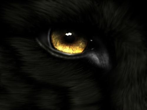 BlackWolf_13